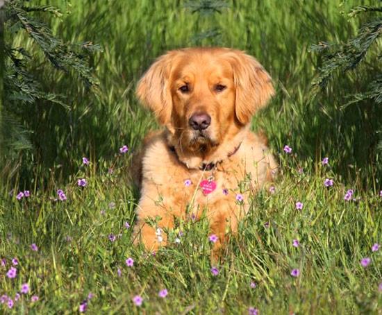 Rascal, Service Dog