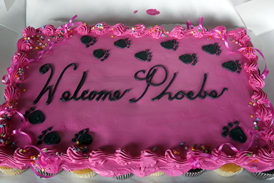 Phoebe's Cake